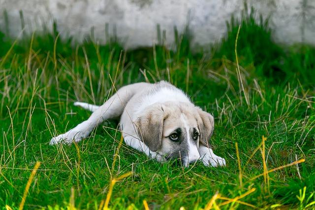 Alergie u psů